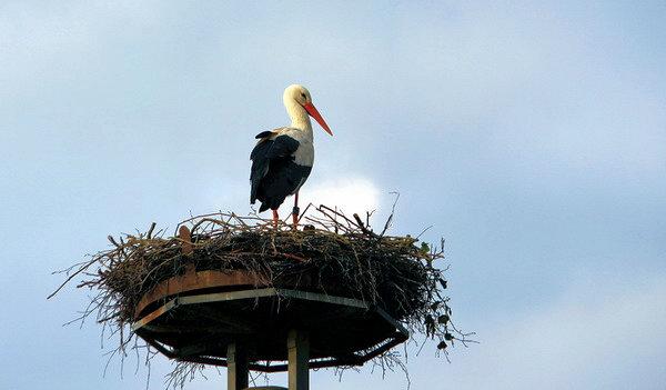 Der erste Storch ist angekommen